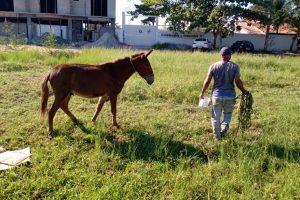 cavalos na pista