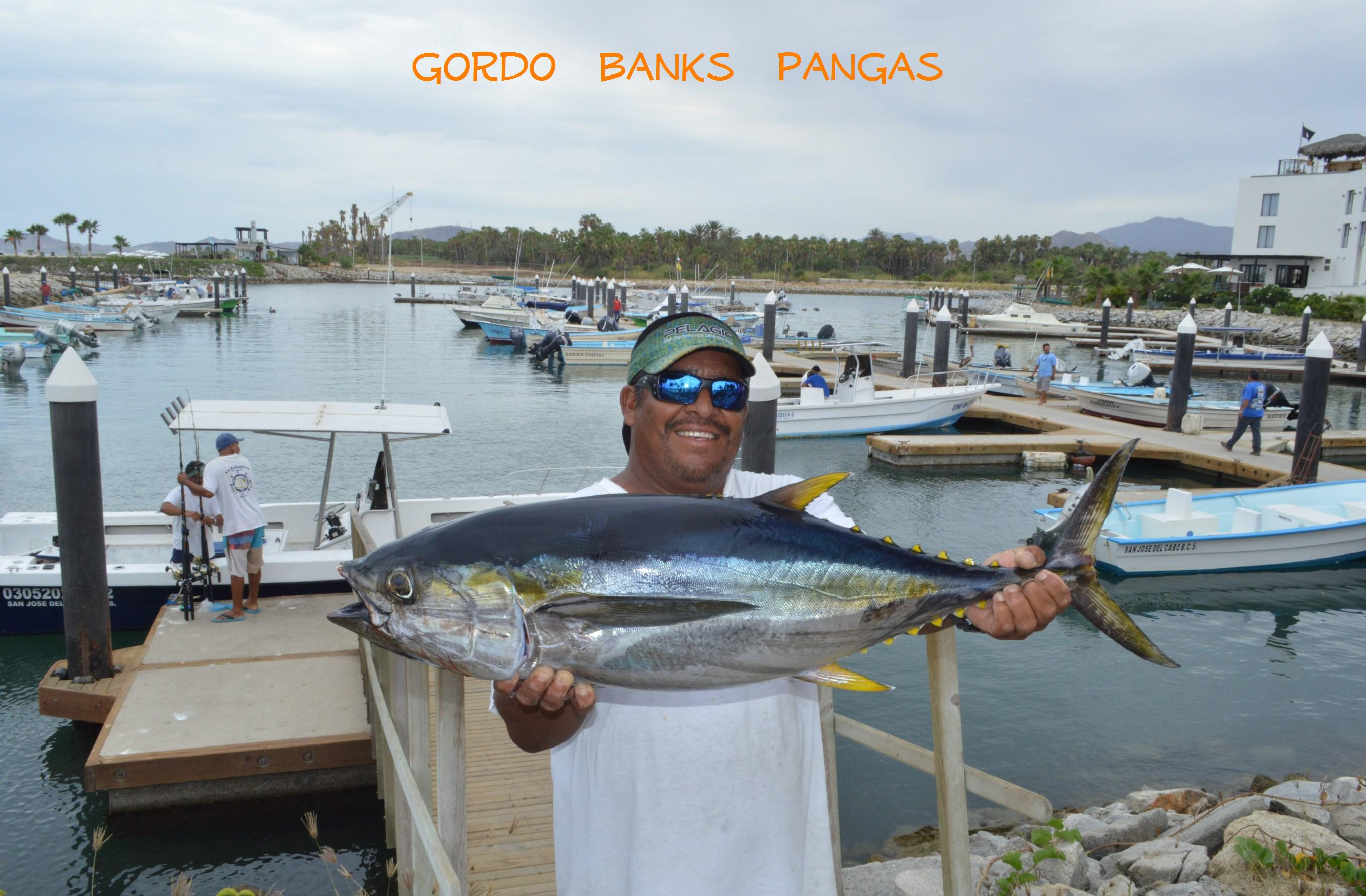 Cabo san lucas fishing report cabo san lucas blog los for Cabo san lucas fishing report