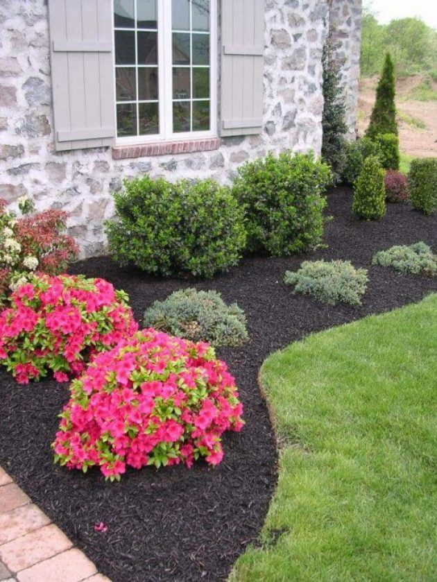 Front Yard Landscaping Ideas - Low Maintenance Evergreen Border with a Pop of Color Cabritonyc.com