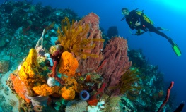 Colourful coral reef scape in north Dominica with sponges, crinoids