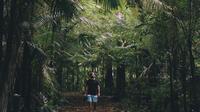 Rainforests & Waterfalls