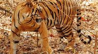 Private 3-Day Ranthambore National Park Tour from Agra