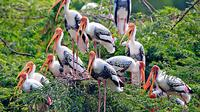Bharatpur Day tour from Agra