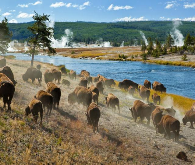 The Vast Yellowstone National Park Stretching Over Portions Of Wyoming Montana And Idaho Was The First U S National Park When It Was Established In