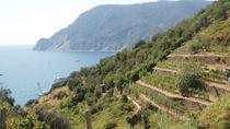 1.5-Hour Cinque Terre Wine Tour in Manarola, Cinque Terre, Wine Tasting & Winery Tours
