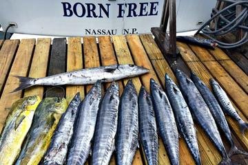 private half day fishing charter in nassau in nassau 328987