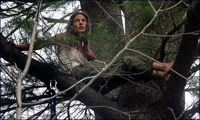 Melisa DeMauro will continue her third day today sitting in a tree in order to prevent it from being cut down by her neighbors.