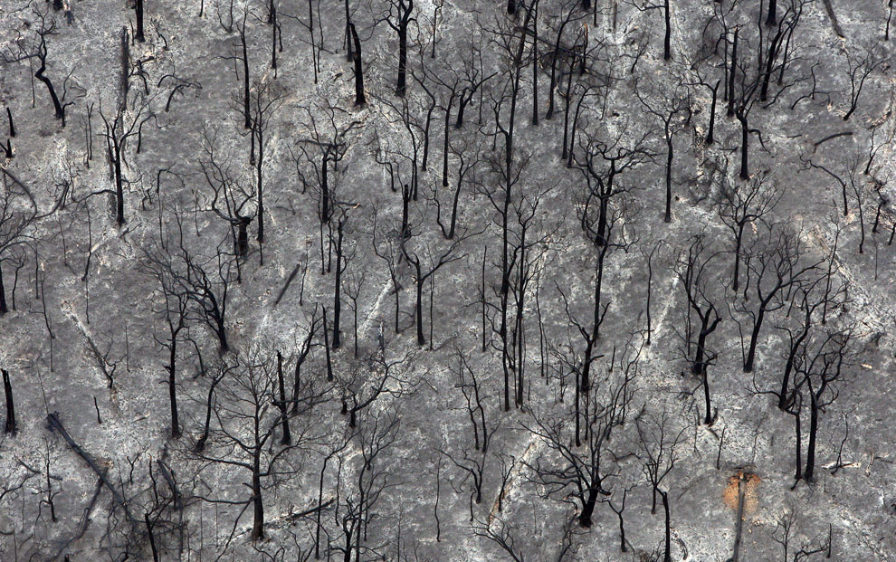 Burnt out trees outside Kinglake that were destroyed by fire are viewed from this aerial shot on February 8, 2009. (WILLIAM WEST/AFP/Getty Images)
