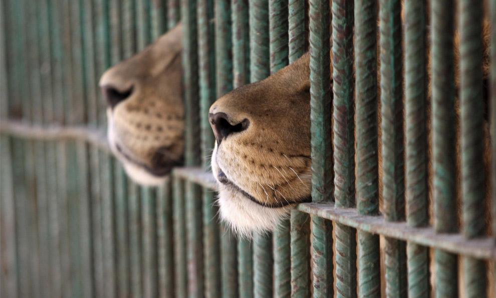 captive breeding | 3Rs of Ecology