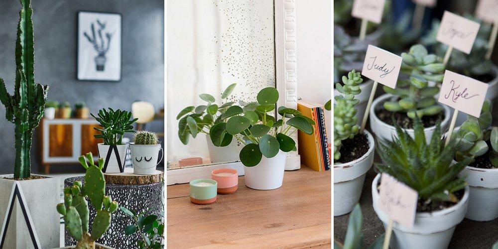 Quelles Plantes Choisir Pour Mon Intrieur Cosmopolitanfr