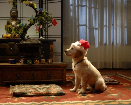 Waiting For Santa Claus Dogs Amp Animals Background
