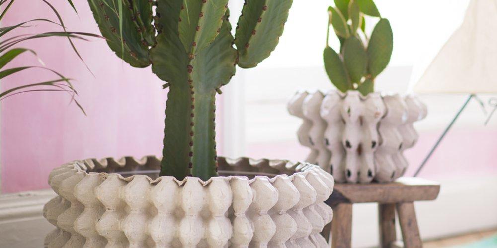 Dco Un Cache Pot En Carton Pour Vos Cactus Marie Claire