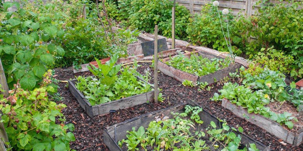 Comment Faire Un Jardin Potager En Permaculture Marie