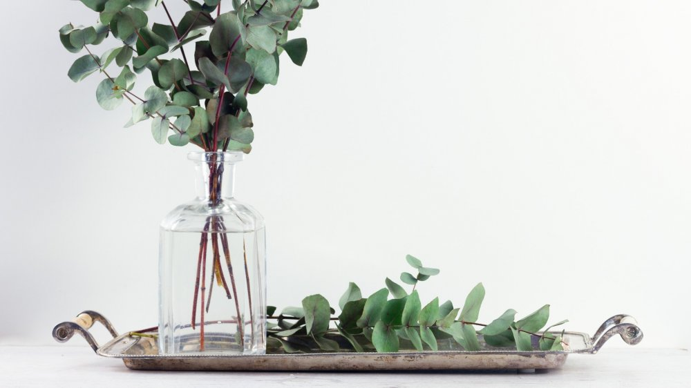des plantes decoratives aux vertus