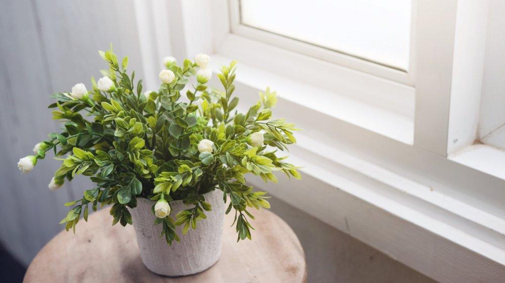 plantes d interieur a fleurs blanches