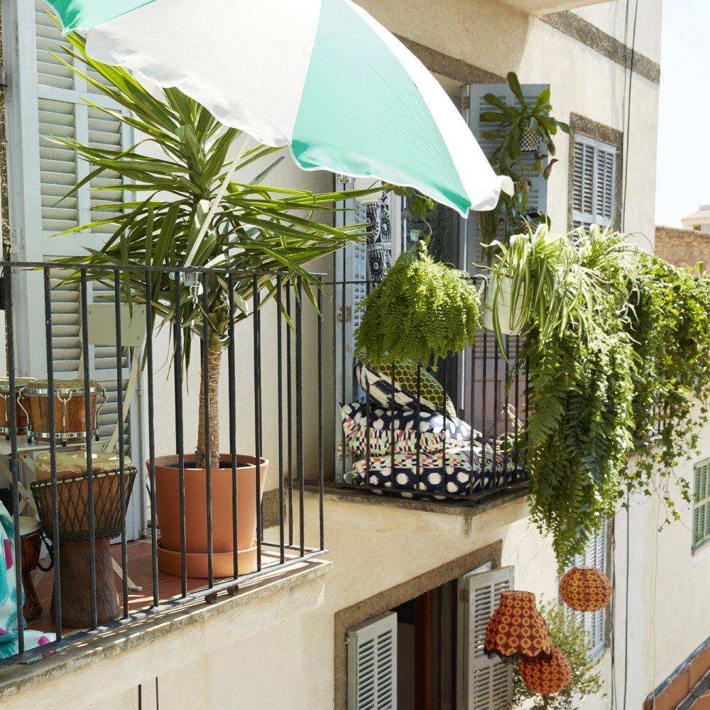 Quelles Plantes Grimpantes Pour Un Balcon Marie Claire