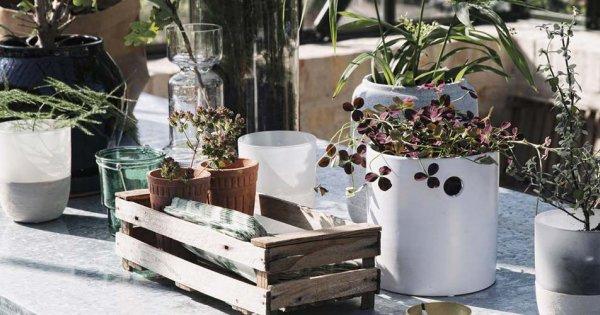 plantes et fleurs pour jardiniere
