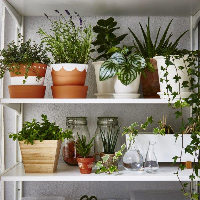 plantes étagères