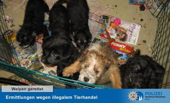 POL-K: 201203-8-K Hundewelpen aus Kühlschrank befreit - Ermittlungen wegen illegalem Tierhandel