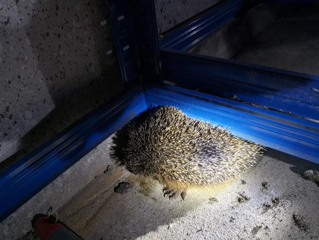 FW-WRN: TH1 - Igel in einer Garage unter einem Schwerlastregal eingeklemmt