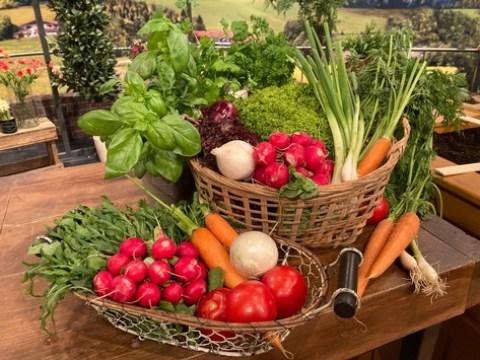 Biotaurus und Gartenexperte Andreas Modery verraten, wie wir schmackhafte Tomaten selbst anpflanzen können und decken häufige Fehler bei der Pflege von Rosen und Zitrusfrüchten auf