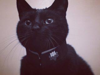 卒業おめでとう!「学ランの襟を作って猫の首輪にしてみた」写真が悶絶レベルのかわいさ