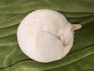 くるりと丸まって眠る猫ちゃんの姿がきれいな丸になってる「まるで満月」