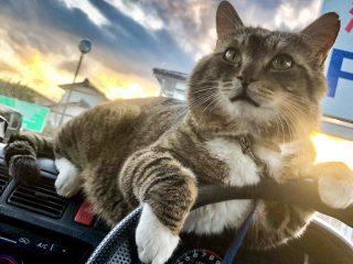 猫を撮影したら壮大な雰囲気に「ジャケ写みたいでかっこよすぎ!」