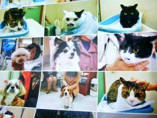絶望に満ちた瞳ばかり…動物病院のカレンダーに掲載された犬猫たちがみんな「諦め顔」でジワジワ来る