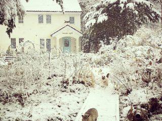 猫はこたつで丸く…なってない!雪の中で大はしゃぎする2匹の猫がかわいい
