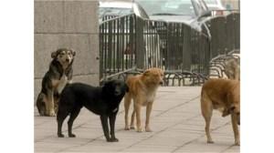 40 кучета, изпуснати с микробус в подножието на връх Перелик