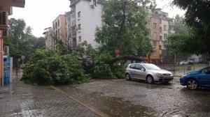 Паднали дървета, премахнати покриви и конструкции след буря в Пловдив (видео)