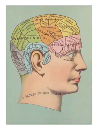 drawing of person's head showing the various areas of the skull associated with their phrenological characteristics
