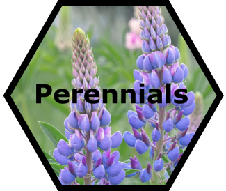 cache valley nursery perennials