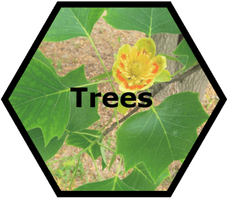 cache valley nursery trees
