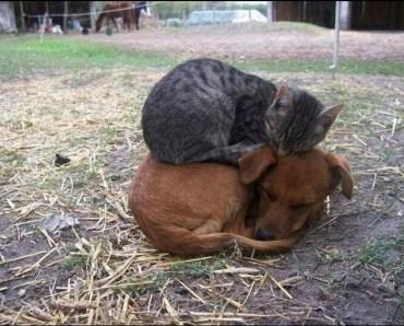 amigos-gatos-perros