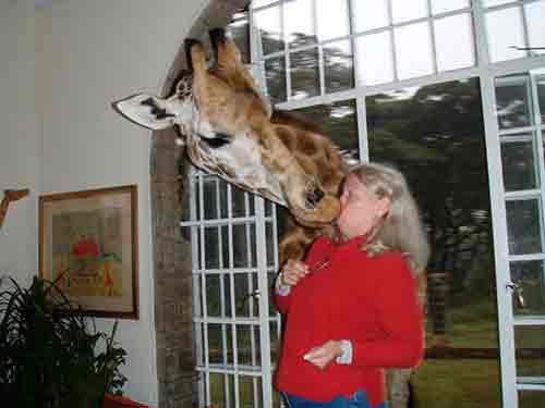 beso-jirafa