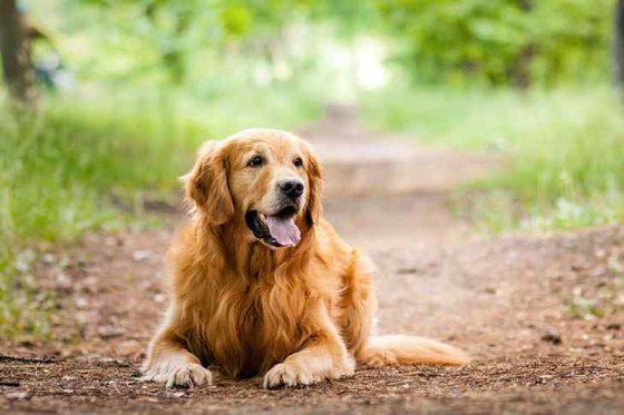 Como o cachorro transpira