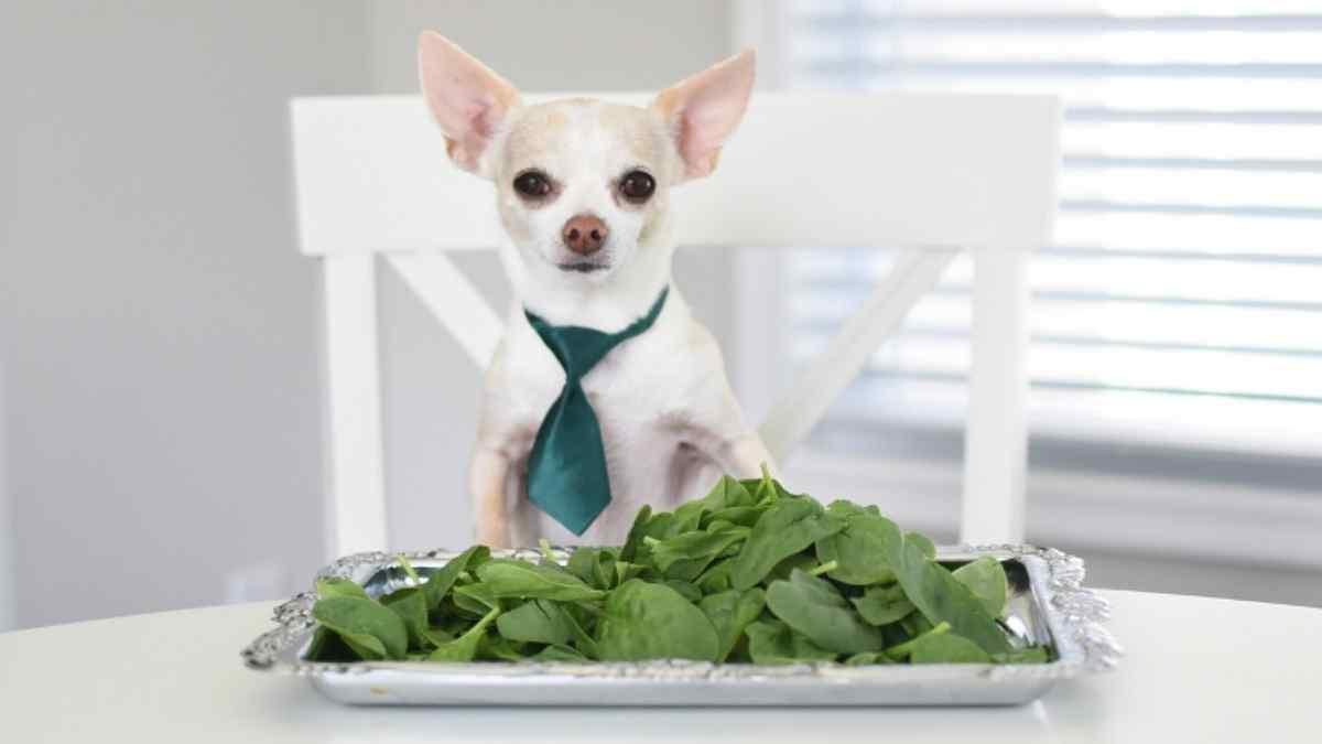 cachorro pode comer espinafre