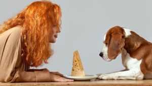 cachorro pode comer queijo