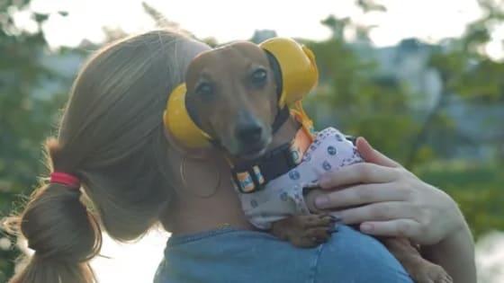 O Que Fazer Com o Cachorro na Queima de Fogos