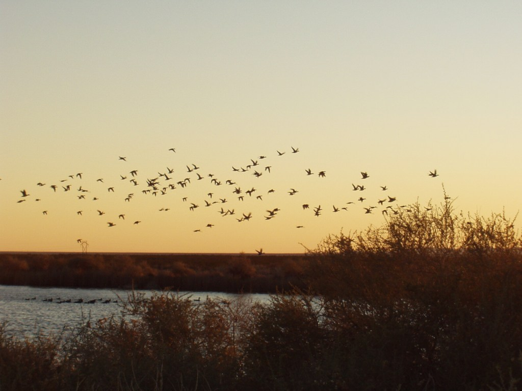 Ducks flying over the lake at The Lord's Ranch.