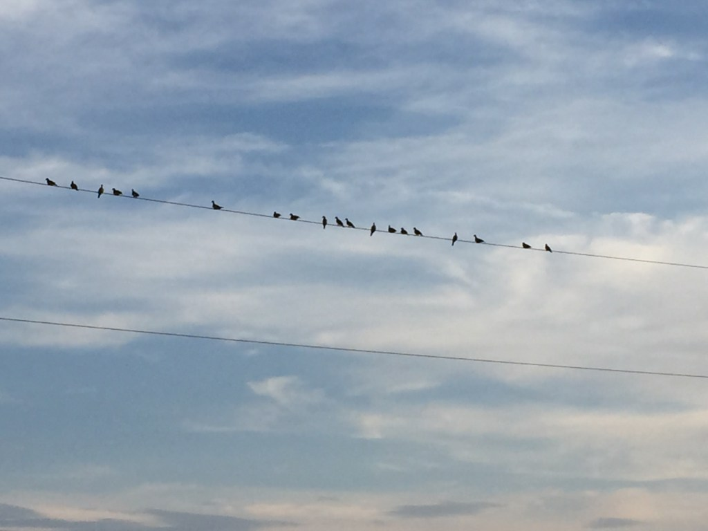 Birds resting on a telephone wire at sunset at The Lord's Ranch.