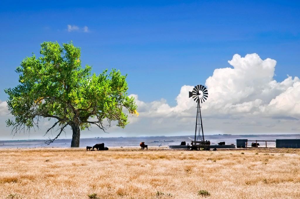 Green tree near a water tank in the desert.