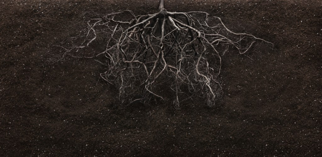 dark roots in soil