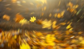 Falling leaves background with radial vortex blur effect. Freeze moment. Autumn season dynamic picture