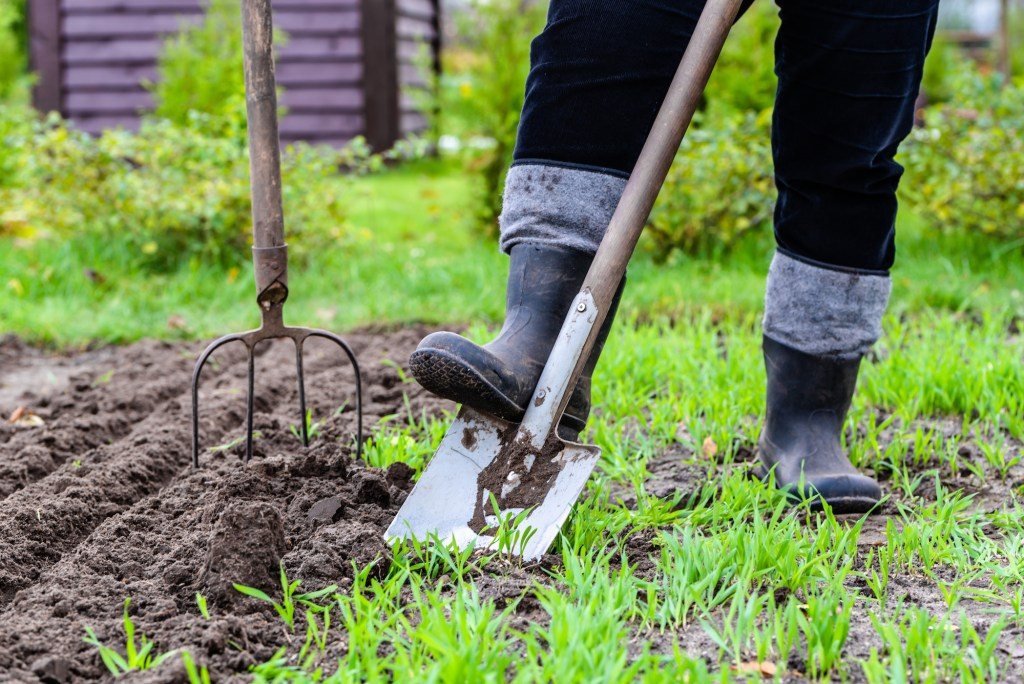 Gardener digging in the garden. Soil preparing for planting in spring.