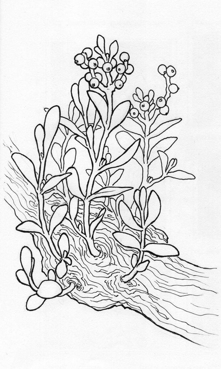 holly ivy mistletoe coloring pages coloring pages