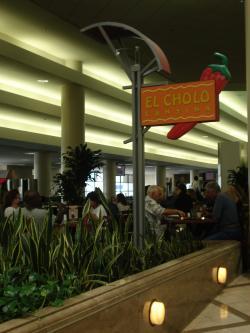 Sansevieria im Flughafen