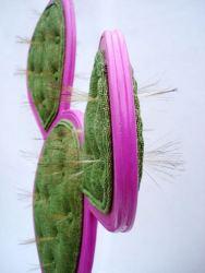 kaktus_sessel_5